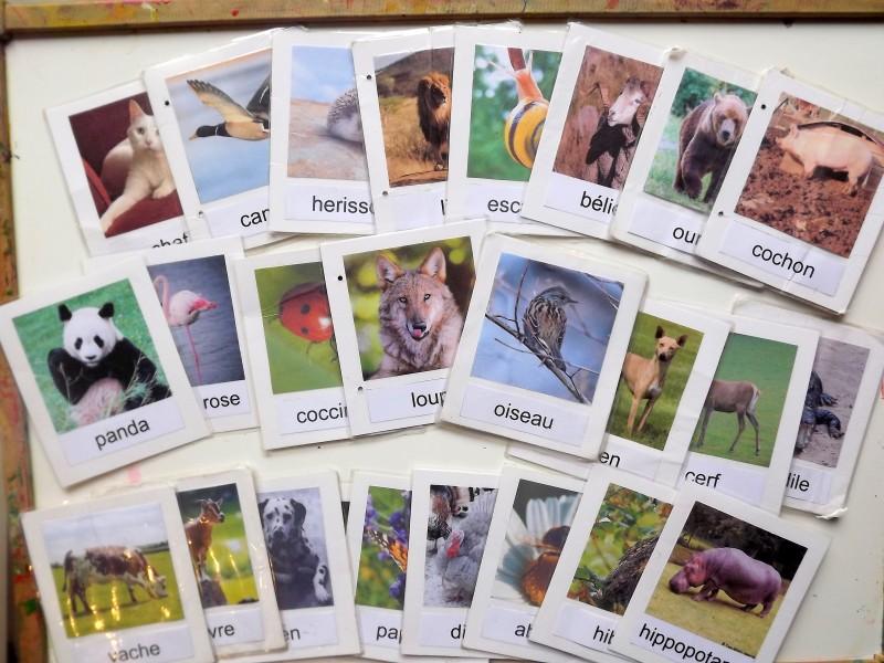 nomenclature animaux