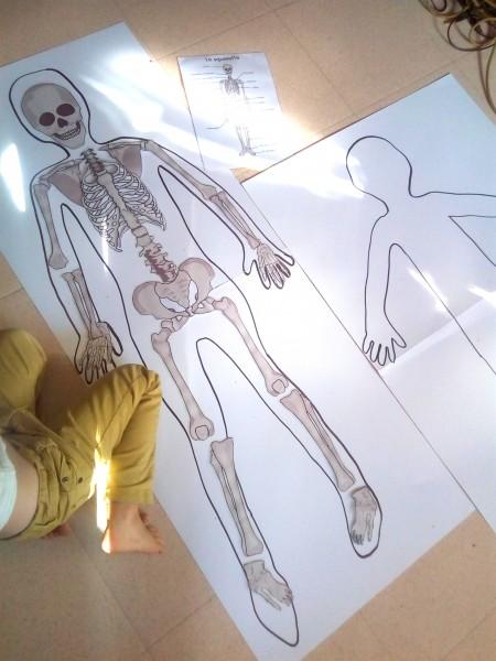 squelette imprimer assembler