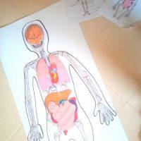 organes imprimer assembler