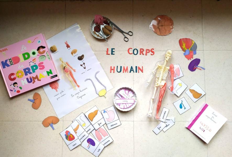 découverte du corps humain